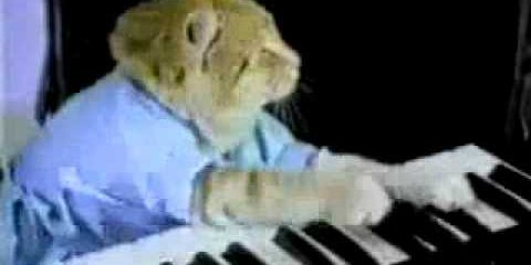 play-off-panic-at-the-disco-keyboard-cat
