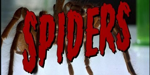 Spiders-Good-Bad-Flicks